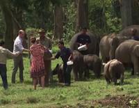 Los Duques de Cambridge dan el biberón a elefantes y rinocerontes en La India