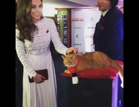 Kate Middleton acaricia al gato Bob en la premiere de 'A street cat named Bob'